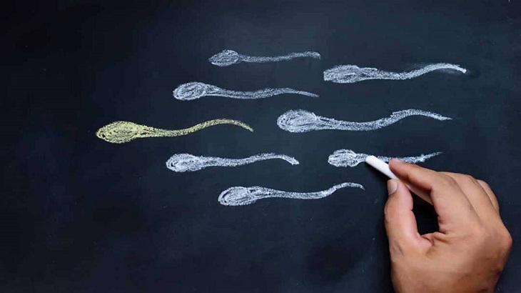 Tinh trùng được xuất ra khỏi cơ thể nam giới cùng với tinh dịch khi quan hệ tình dục