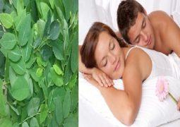 5 cách chữa yếu sinh lý bằng rau ngót hiệu quả 100%