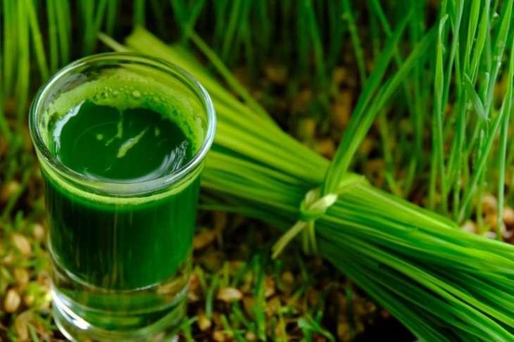 Lá hẹ tươi giúp bạn tận dụng được toàn bộ lượng dưỡng chất có trong cây thuốc