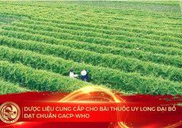 100% dược liệu đều đảm bảo tiêu chuẩn GACP-WHO