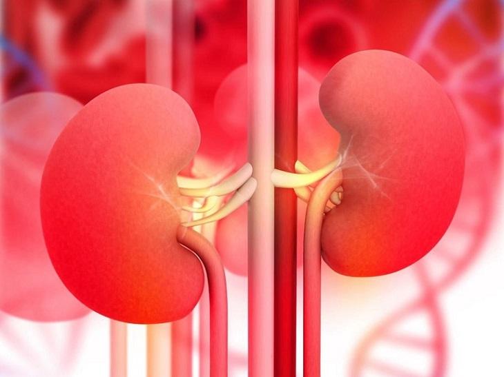 Suy giảm chức năng thận có thể là do tuổi tác, thói quen sinh hoạt không khoa học hoặc một số bệnh lý