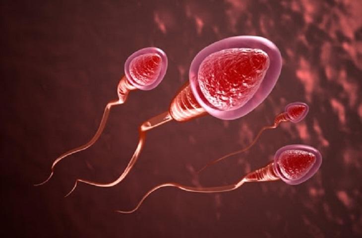 Tinh trùng chất lượng là yếu tố quan trọng quyết định đến sự hình thành và phát triển bào thai