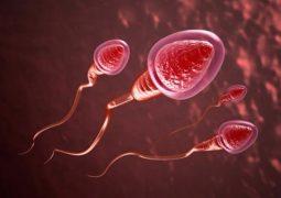Tinh trùng có màu đỏ là tình trạng bất thường ở sinh lý nam