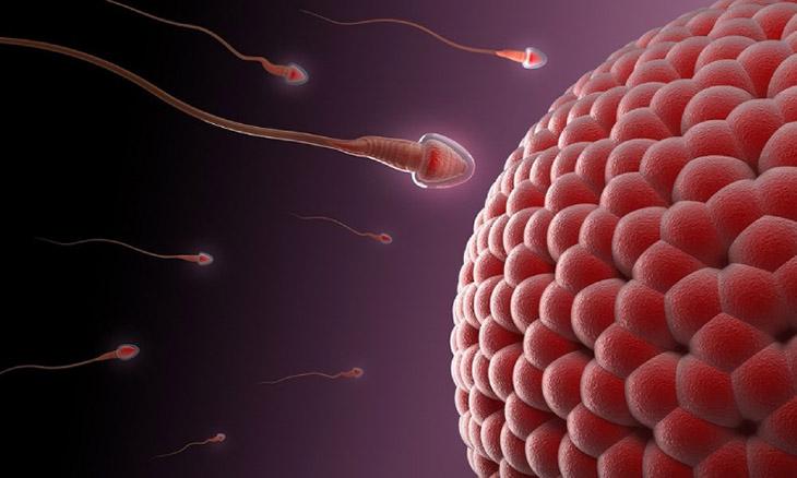 Tình trạng bất thường ở tinh trùng có thể cảnh báo bệnh viêm túi tinh