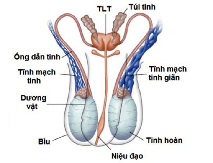 Viêm túi tinh là một trong những nguyên nhân gây tinh trùng vón cục như thạch