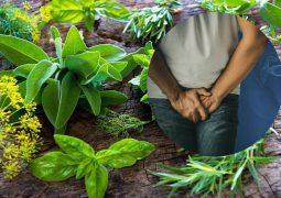 Tìm hiểu cách chữa sỏi bàng quang dân gian bằng thuốc nam