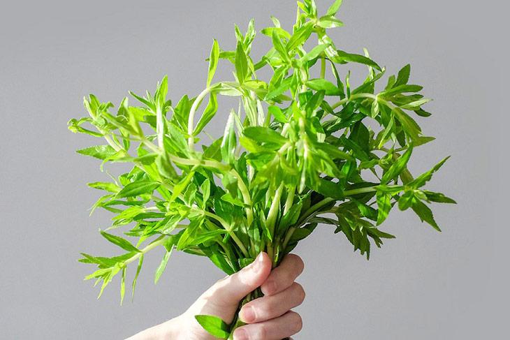 Rau ngổ là một trong những mẹo chữa sỏi mật được nhiều người tin dùng