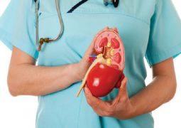 Nang thận là những túi dịch hình thành trong thận tạo thành những khối u nang