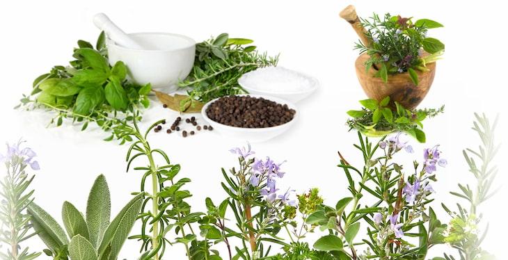 Một số cây thuốc nam sử dụng điều trị viêm cầu thận IgA