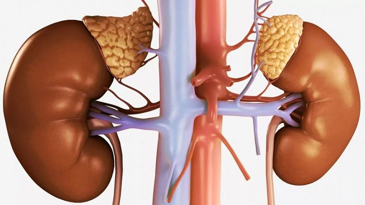 Suy vỏ thượng thận làm giảm tiết các hormone quan trọng của hệ nội tiết.
