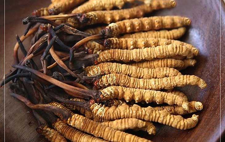 Nguyên liệu đông trùng hạ thảo có thể chế biến thành nhiều món ngon
