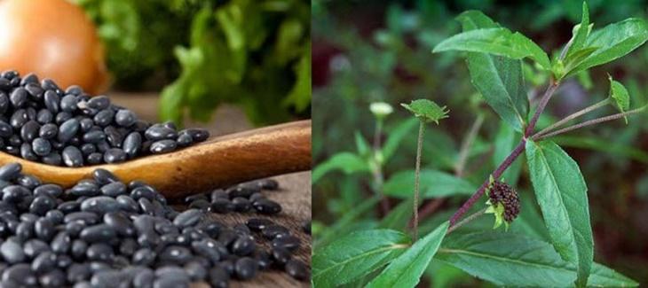 Đỗ đen kết hợp với cây cỏ mực chữa suy thận hiệu quả
