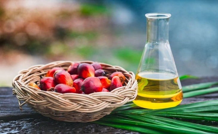Sử dụng dầu cọ lùn hiệu quả nhanh
