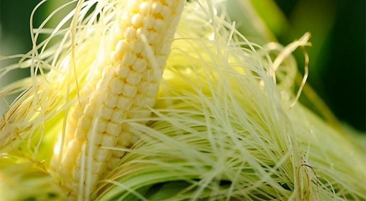 Râu ngô là một phương pháp chữa viêm đường tiết niệu bằng cây thuốc Nam