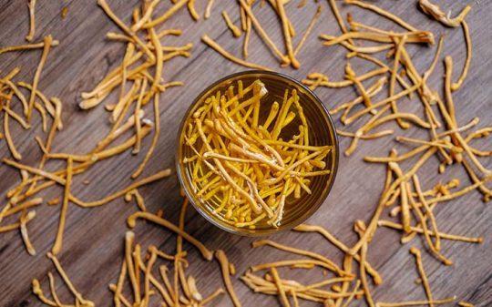 Trùng thảo rất tốt cho sức khỏe con người