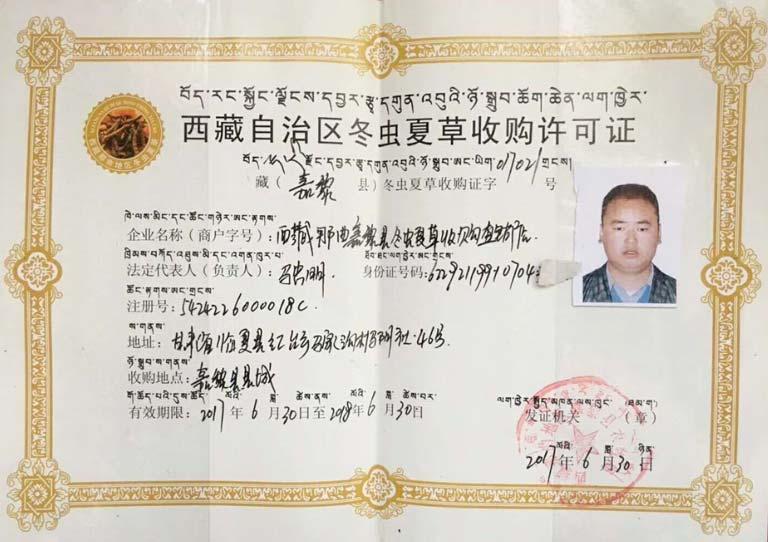 Giấy cấp phép thu mua đông trùng hạ thảo tại Tây Tạng