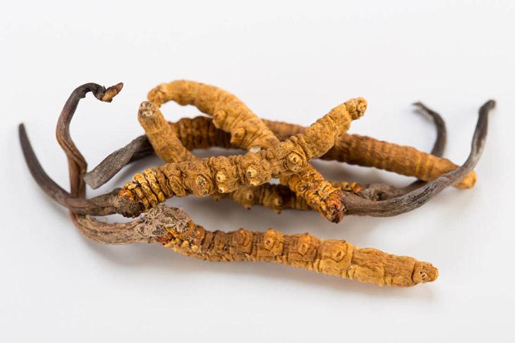 Dùng đông trùng hạ thảo khô chỉ việc nhai trực tiếp