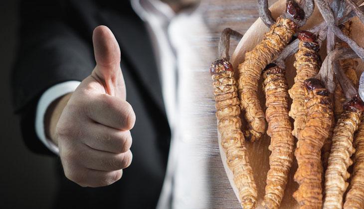 Tác dụng của đông trùng hạ thảo với nam giới là cải thiện sinh lý