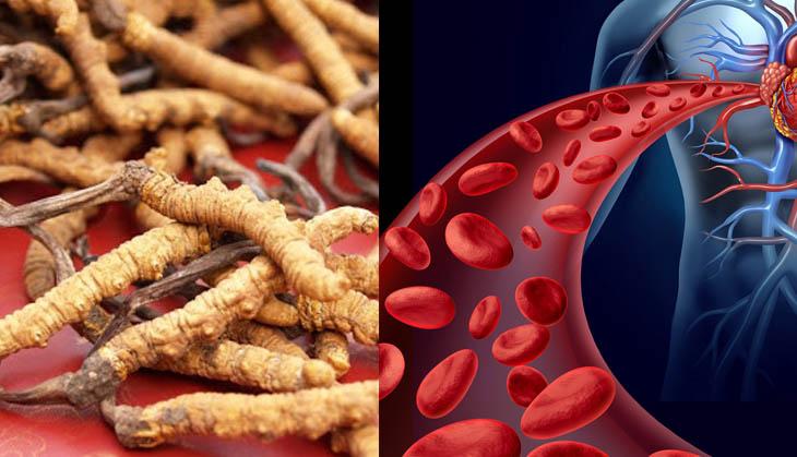 Các chất trong đông trùng hạ thảo tốt cho tim mạch người già