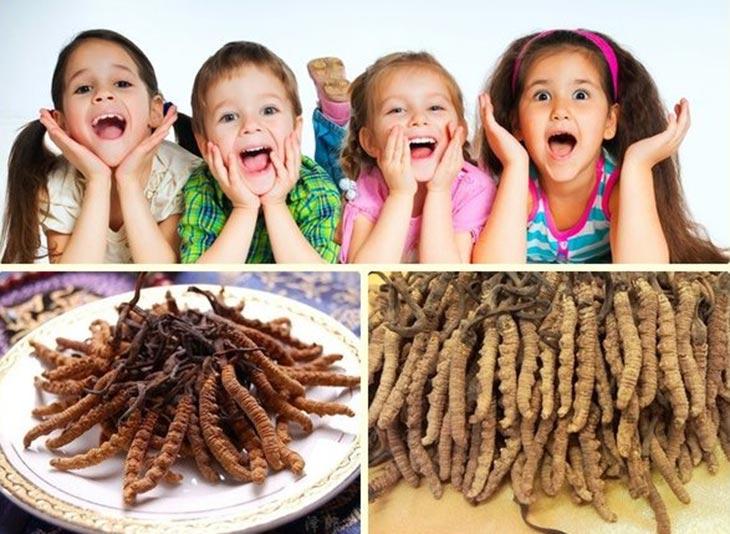 Đông trùng hạ thảo có nhiều công dụng tốt cho trẻ