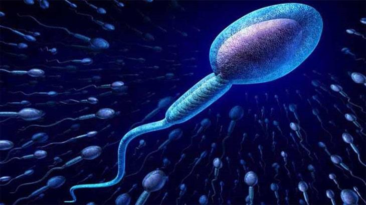 Thận yếu có ảnh hưởng tới tinh trùng? Vấn đề được nhiều người quan tâm