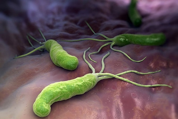 Vi khuẩn HP trong dạ dày con người