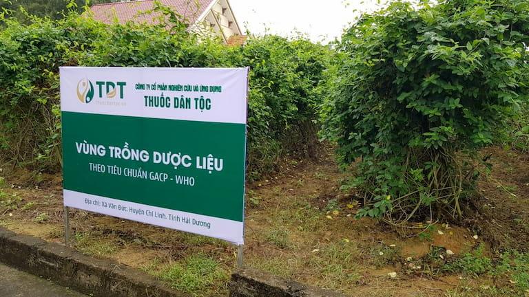 Ảnh chụp thật tại Vườn dược liệu Đông y tại Chí Linh - Hải Dương