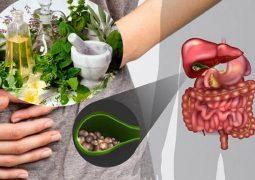 bài thuốc chữa sỏi mật