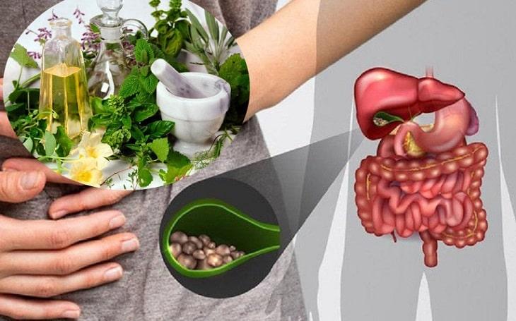 Các bài thuốc chữa sỏi mật từ cây thuốc Nam lựa chọn những dược liệu thiên nhiên