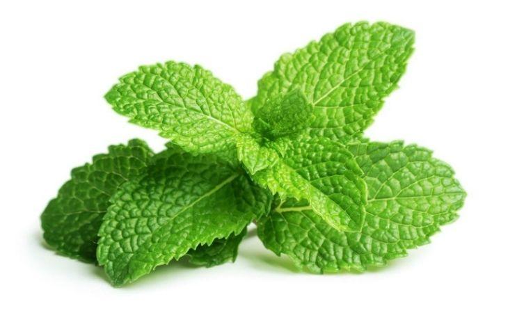 Trong lá bạc hà có hoạt chất chống viêm và giảm đau