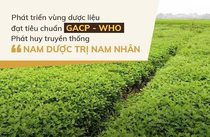 Vườn dược liệu sạch, cam kết chất lượng của Đỗ Minh Đường