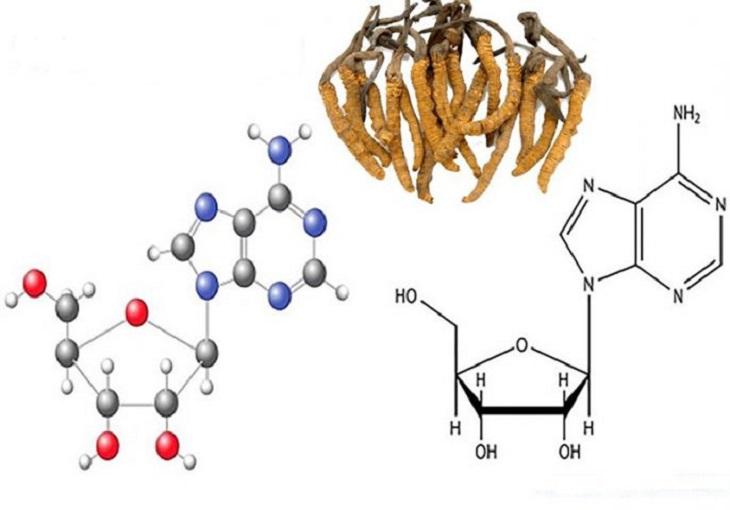 Công thức phân tử của Cordycepin