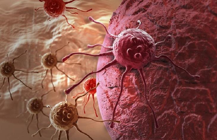 Cordycepin trong đông trùng hạ thảo có tác dụng chống lại các tế bào ung thư