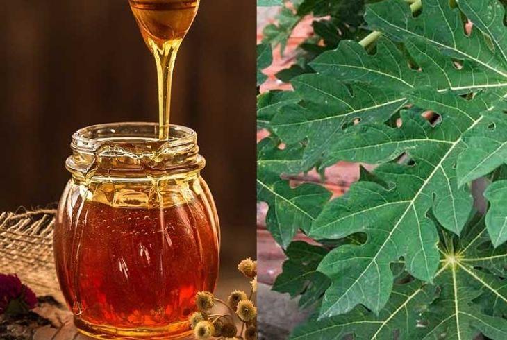 Khi kết hợp với mật ong, bài thuốc từ lá đu đủ dễ uống và hiệu quả cao hơn