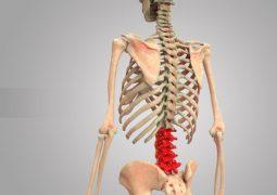 Thoái hóa đốt sống lưng L4 L5: Dấu hiệu, nguyên nhân và cách điều trị