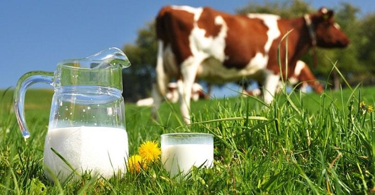 Sữa bò dành cho người bị thoát vị đĩa đệm được khuyên dùng