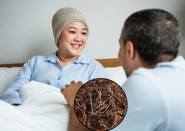 Bạch hoa xà thiệt thảo là cứu tinh cho bệnh nhân bị ung thư
