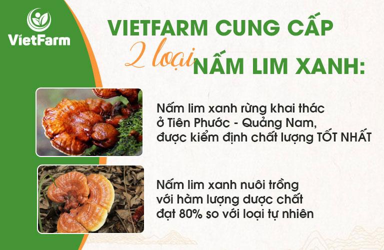 Trung tâm Vietfarm cung cấp 2 loại nấm lim xanh đáp ứng nhu cầu người tiêu dùng