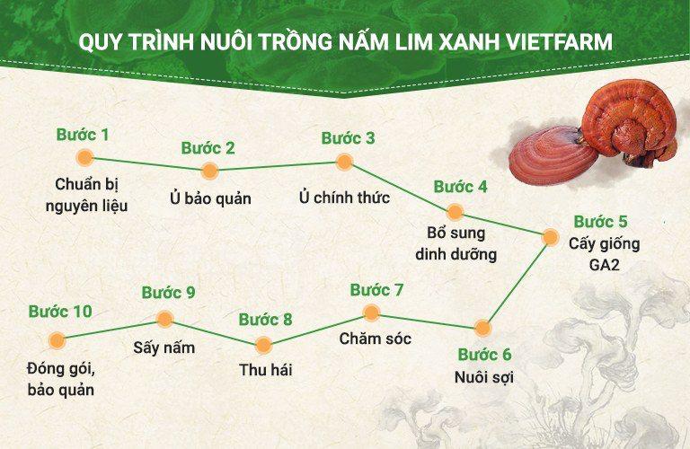 Quy trình nuôi trồng 10 bước chuẩn hóa của nấm lim xanh Vietfarm