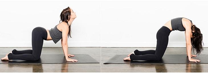 Bài tập yoga chữa thoái hóa cột sống với tư thế con mèo