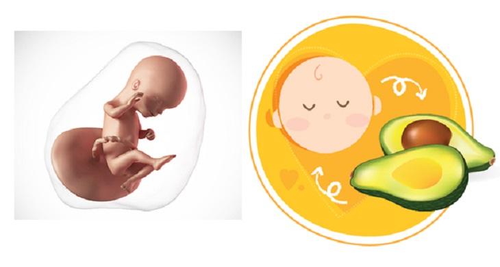 Thai nhi 16 tuần tuổi có nặng khoảng 99g và có chiều cao khoảng 11,6 cm