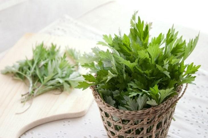 Dùng lá ngải cứu trị đau cột sống