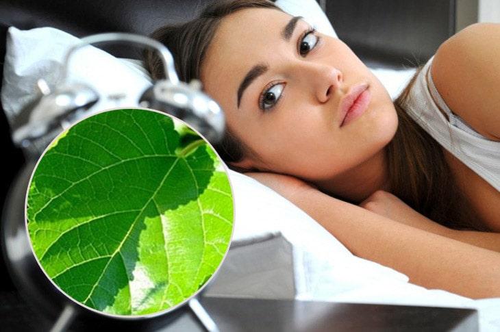Bạn áp dụng cách dùng lá dâu tằm để nhanh chóng lấy lại giấc ngủ