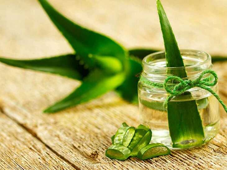 Mẹo dùng lô hội để làm mềm da, cải thiện triệu chứng bệnh da liễu