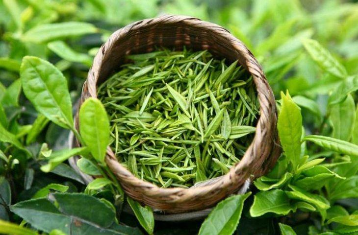 Trà xanh giúp giảm ngứa, giảm viêm do vảy nến hiệu quả