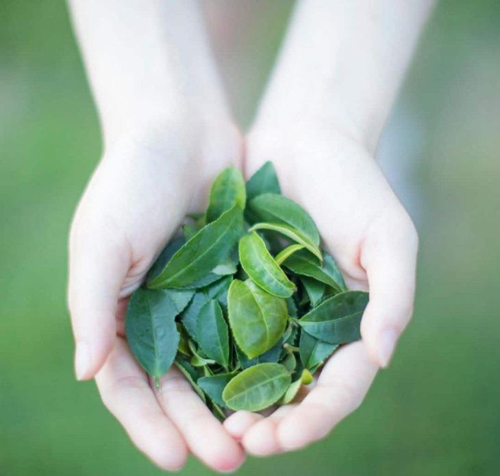 Tắm từ nước lá trà giúp điều trị mẩn ngứa, dị ứng hiệu quả