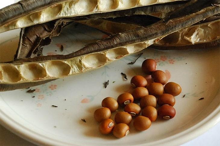 hạt đậu rồng chữa bệnh viêm hang vị dạ dày