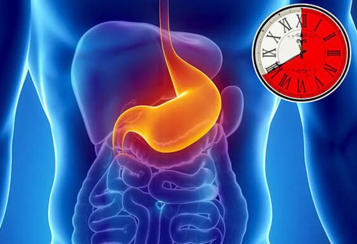 Hang vị là có chức năng tiêu hóa thức ăn và bảo vệ cơ quan tiêu hóa khỏi sự tổn thương