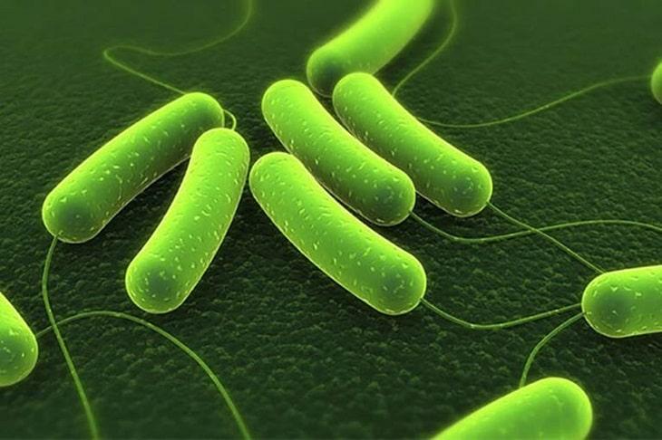 Nguyên nhân chính gây bệnh là vi khuẩn HP hoặc do đã mắc bệnh nền dạ dày trước đó