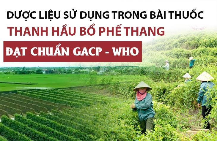 Thanh hầu bổ phế thang sử dụng 100% nam dược chất lượng cao đạt chuẩn GACP - WHO